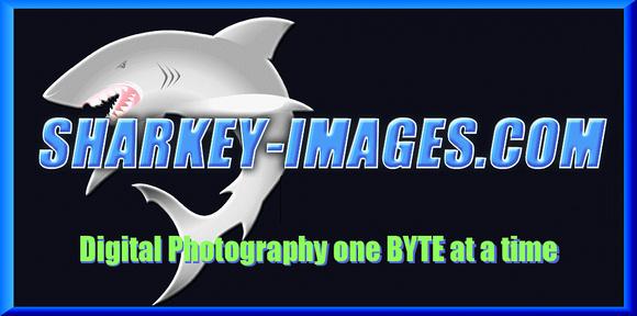 Sharkey-Images.com